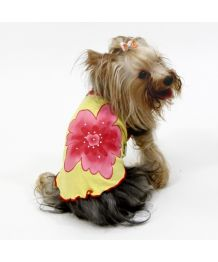 Tank top lotus flower yellow dog original breed miniature, special mini dog cheap for cado unique