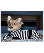 Superb little chihuahua wearing a chic and elegant sailor dog clothing delivery to Paris, Besançon, Montpellier, Cannes ...