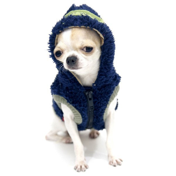 Small dog dressed with a small very warm star jacket for cheap cold on sale on online pet store fashion