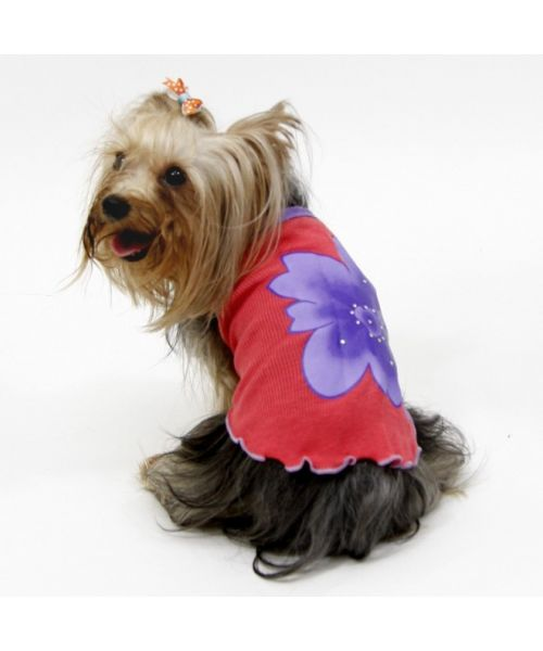 Clothes summer for small dog, miniature dog, miniature breed for birthday gift original fashion for small animal