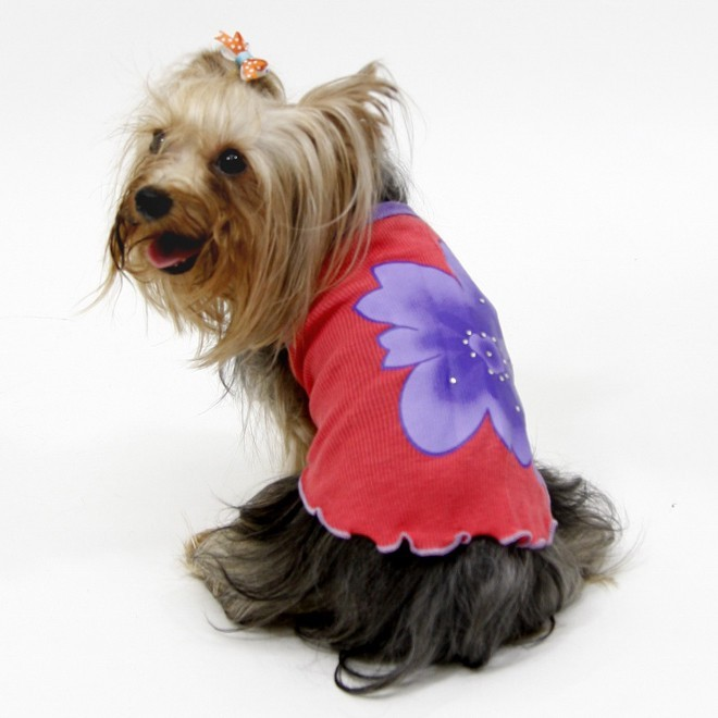 Summer outfit for small dog, mini dog, miniature breed for original fashion birthday gift for small animal