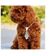 accessoire pour chien design et tendance : cravate strass, noeud papillon, collier original, bijoux colliers animaux originaux