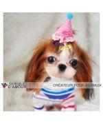 Dog accessories for anniversary : clip cap, strip party hat, accessories festive pet