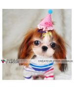 Dog accessories for anniversary : clip cap, strip party hat, accessories festive pet
