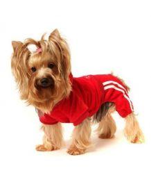 Jogging rouge pour chiens en velour