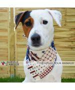 Booba magnifique jack russel portant accessoire bandana gueule d amour america cadeau noel original