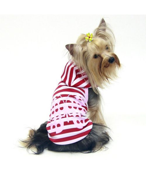 Yorkshire weighing 3.5 pounds, wearing a tank top size M, ideal gift birthday, anniversary, fete, noel...in mouth d love