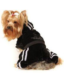 Jogging black comfort - Dog