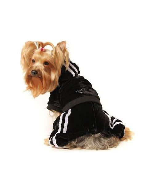 black jogging class for dog autumn winter warm collection hangover of love