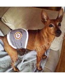culotte pour petits chiens culotte hygienique pour chien femelle couche culotte pour chienne. Black Bedroom Furniture Sets. Home Design Ideas