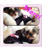 Bamboo has adopted his new sweater black love velour dog