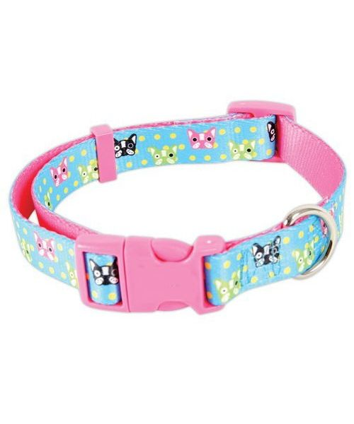 dog collar light blue small female cheap original and very cute for sale online fast delivery available