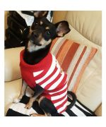 cute dog wearing santa claus outfit