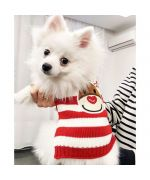 cute spitz wearing a garment of noel