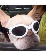lunette chien soleil protection ete gueule d amour pas chere