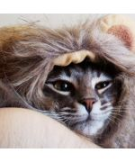 cat with hat lion head free shipping