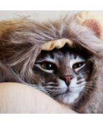 chat avec chapeau tête de lion livraison gratuite