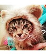 costume lion head for dogs free delivery