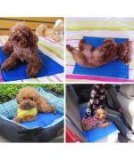 tapis anti-chaleur pour chien
