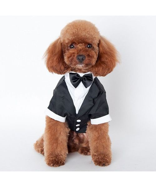 Tuxedo for pets : chihuahua, yorkshire, bichon, poodle, pug, bulldog, jack russell, dog and cat...