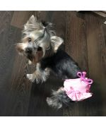 small yorkshire terrier with pants for dogs, pink mouth of love delivery martinique, guadeloupe, reunion, saint barthelemy