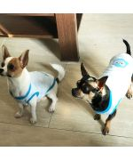 sweater for small dog soft pajamas d'interieur pas cher guadeloupe martinique reunion st barth