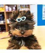 pince pour chien originale petits animaux de compagnie accessoires cheveux chiens guadeloupe martinique ile de la reunion