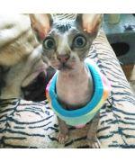 pull polaire pour chat tout doux et chaud en vente sur animalerie en ligne fashion pour animaux de compagnie