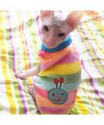 pull pour chat en polaire pas cher taille xs s m l xl xxl fashion pour animaux de compagnie