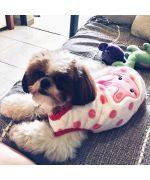 acheter polaire pour chien rose pour chien fille trop mignon avec petit lapin tout doux cadeau original pour noel