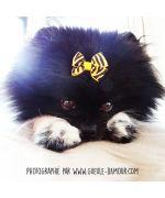 pince pour petit chien avec noeud élastique pas chere livraison suisse martinique guadeloupe guyane belgique