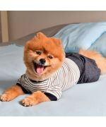 Wholesaler of clothing for large dogs, Paris area, Lyon, Nantes, Bordeaux, Grenoble, Ajaccio, Metz...