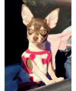 clothing for small chhuahua size XS sleeveless easy to put on warm cheap
