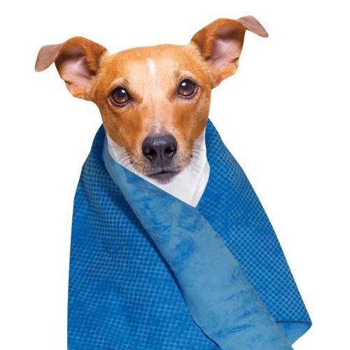 cooling-towel-for dog-and-cat ps expensive quality and fast delivery article cooling dogs