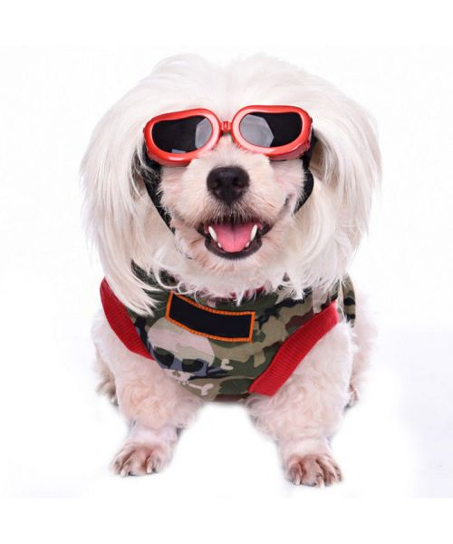 Sunglasses for dogs black
