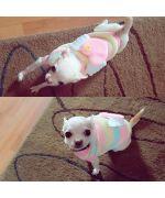 pull pour petit chien adorable tout doux boutique gueule d amour