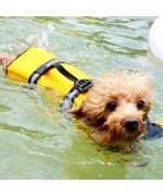 dog wearing his life jacket for dogs yellow mouth of amour.jpg