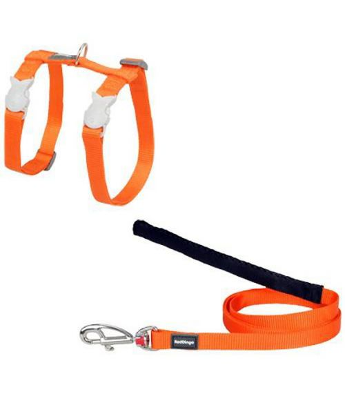 Special harness and cat Leash Orange