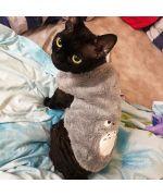 pull special cat