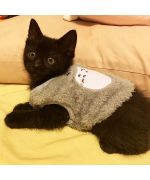 sweater for a kitten