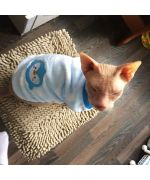 sweater clothes for sphinx cat