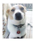 medaille rouge pour chien originale à graver