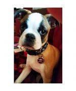 medaille pour chien à graver noire skull