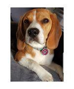 medaille pour chienne à paillettes