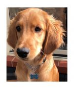 medal for golden retriever