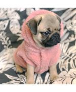 very soft sweater for dogs