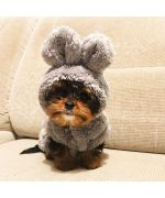 Coat dress, Little Bear - Dog and cat