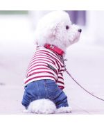 sailor suit for red and white dog