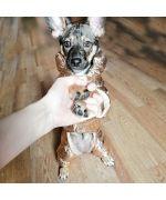 manteau fourre impermeable pour petit chien