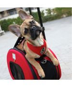 dog harness puppy dog chihuahua red chic class reunion martinique guadeloupe